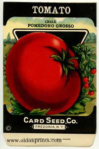 Tomato. (chalk pomedoro grosso)