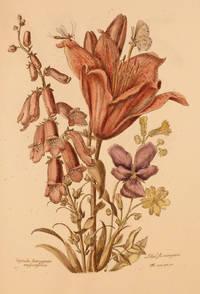 Variae ac Multiformes Florum Species; Designees et Gravees d'apres le naturel par Nicholas Robert