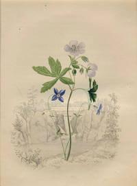 Fairy Flax and Crowfoot Geranium.  (Background- Passaic Falls, New Jersey)