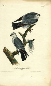 'Mississippi Kite', hand colored lithograph, octavo edition