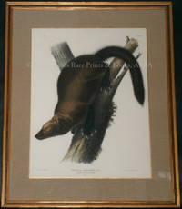 Plate XLI Pennant\'s Marten or Fisher. Mustela Canadensis, Linn.