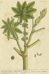 """Greater Spurge or Palma Christi from """"A Curious Herbal, containing five hundred cuts, of the most useful plants, which are now used in the practice of physick"""""""