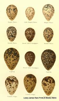 Eggs of Ringed Plover, Little Ringed Plover,  Kentish Plover, Broad-billed Plover, Lapwing, Common Snipe