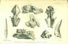 View Image 1 of 2 for Palaeontological memoirs and notes of the late Hugh Falconer Inventory #40957
