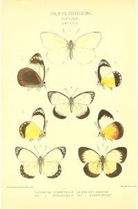 Papilionidae.  Pierinae.  Delias VI.  1,2. Delias Funerea.  3,4. Delias Georgiana.  5,6. Delias Sacha.  7,8. Delias Euryxantha