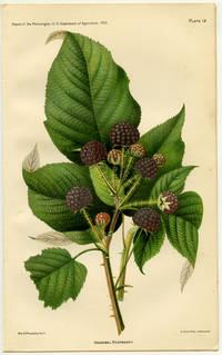 Hannibal Raspberry