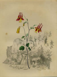 Wild Colombine.  (Background- Matanga Fall, Pennsylvania) by Whitefield, Edwin - 1845