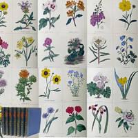 Maund's Botanic Garden. Volumes I -VII [only of 13]