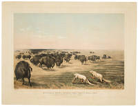 Buffalo Hunt under the White Wolf Skin. An Indian Stratagem on the Level Prairies