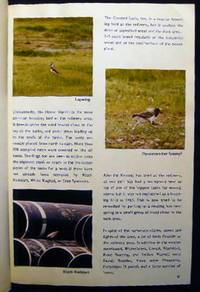 1978 - 1987 Collection of Ornithological Studies & Ephemera from Stigsnaes Denmark Industrial Area By Lis and Bent M. Sorensen