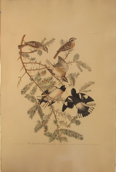Engraving with etching, aquatint and hand-coloring on 1836 watermarked J. Whatman hand-made paper. U...
