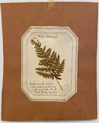 """White Mountains. Plucked near the Cascade, while walking up the hills, on the stage route thro' the """"Notch"""".; Fern Herbarium"""