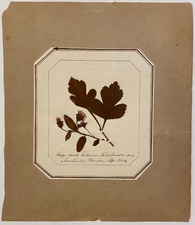 1849. unbound. Herbarium with manuscript notes. White card with specimen 3 5/8 x 4 inches, on sheet ...