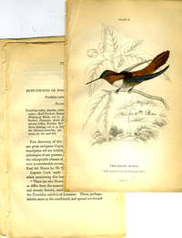 Trochilus Rufus (Ruff-necked or Nootka Humming-Bird), hand colored engraving