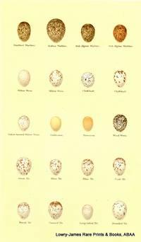 Dartford Warbler, Rufous Warbler, Sub-alpine Warbler, Willow Wren, Chiffchaff, Yellow-browed Willow Wren, Wood Wren, Gold Crest, Fire Crest, Great Tit, Blue Tit, Coal Tit, Marsh Tit, Crested Tit, Long-tailed Tit, Bearded Tit Eggs