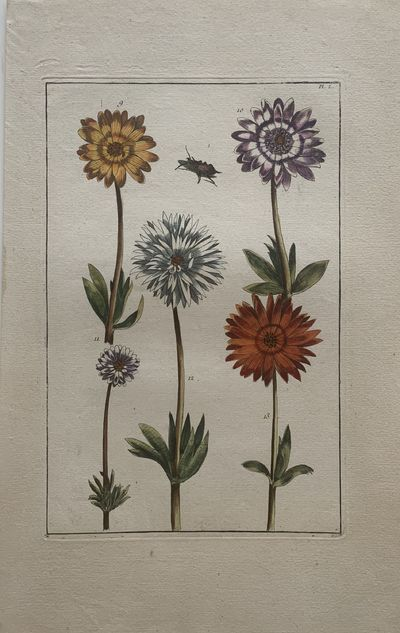 Paris: Louis Charles Desnos, 1771. Maria Sibylla Merian. Engraving with original hand coloring. Imag...