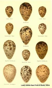 Eggs of Little Stint, Redshank, Temminick's Stint, Redshank, Spotted Redshank, America Stint, Bartram's Sandpiper, Yellowshank