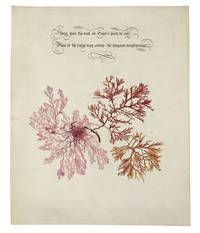 Botanical watercolor captioned with a couplet by Byron