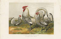 SILVER SPANGLED HAMBURGHS, The Property of Harrison Weir Esq.