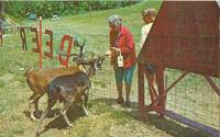 Feeding the deer at the Gatlinburg Ski Resort, Gatlinburg, Tennessee 1960s unused Postcard