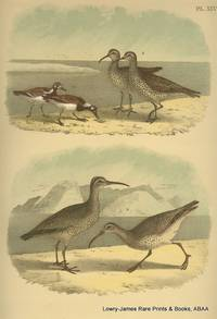 Plate XLV The Turnstone, Esquimaux Curlew, Hudsonian Curlew
