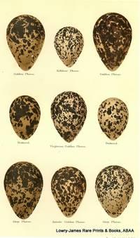 Eggs of Golden Plover, Kildeer Plover, Dotterel, Virginian Golden Plover, Grey Plover, Asiatic Golden Plover
