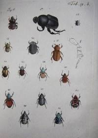 Archiv der Insectengeschichte