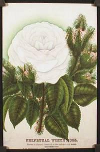 Perpetual White Moss