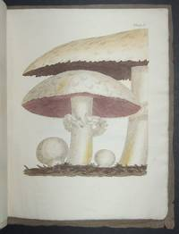 The Mushroom and Champignon Illustrated, Compared with, and Distinguished from, the Poisonous Fungi that Resemble them