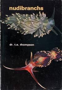 image of Nudibranchs