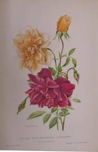 Les Plus Belles Roses Au Début Du XXe Siècle. Ouvrage honoré du prix Joubert De L'Hiberderie