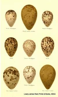 Eggs of  Wood Sandpiper, Black-tailed Godwit, Ruff, Green Sandpiper, Bar-tailed Godwit
