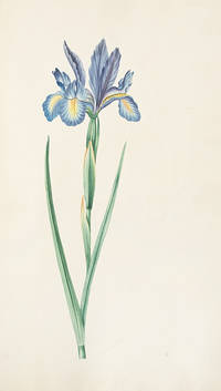 Botanic Plants Drawn by a Lady for Mrs. Bliss [manuscript title]