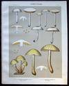 View Image 1 of 2 for Original Color Lithograph Plate 57 Pholiota Praecox & Pholiota Adiposa Inventory #26104