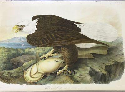 New York: J. Bien, 1860. First Bien Edition. Near Fine. John James Audubon. Double-elephant Folio (3...