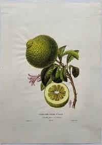 Limettier Pomme D'Adam