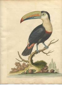 The Toucan, or Brasilian Pye.