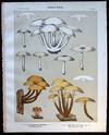 View Image 1 of 2 for Original Color Lithograph Plate 47 Clitocybe Multiformis & Collybia Velutipes Inventory #26094