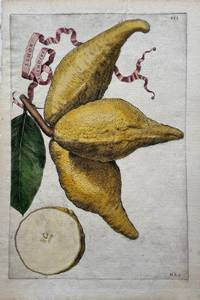 Limon Racemosus
