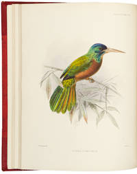 A Monograph of the Jacamars and the Puff-Birds, or Families Galbulidae and Bucconidae