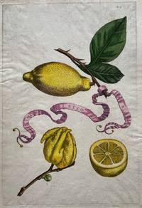 Limon A riuo Sevrio