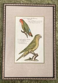 Bird Engraving. Hand-colored. Two Parrots, Plate 54. Papagey. Psittacus minimus viridis cum fronte et gulla rubra; Psittacus minor viridis cauda longa