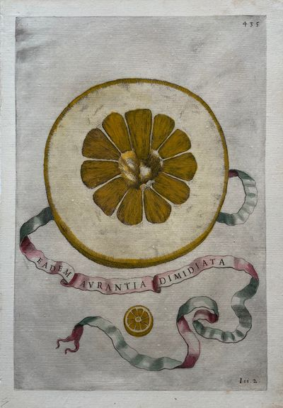 Rome: Herman Scheus, 1646. Engraving with hand coloring. Plate 435. Image measures 12 X 8 inches. Th...