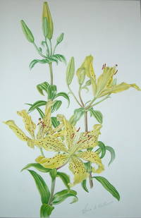A FINE LARGE ORIGINAL WATERCOLOUR OF A LILIUM 'CONNETICUT KING', BY LORNA B. KELL
