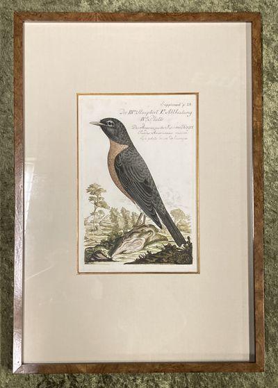 , . Fine. Frisch (Artist), Johann L.. Bird Engraving. Hand-colored Robin. Plate 28. Kramets Vogel. T...