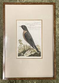 Bird Engraving. Hand-colored Robin. Plate 28. Kramets Vogel. Turdus Americanus minor