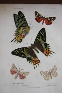 Histoire Naturelle Des Insectes:  Orthopteres, Nevropteres, Hemipteres, Hymenopteres, Lepidopteres et Dipteres (Two Volumes)