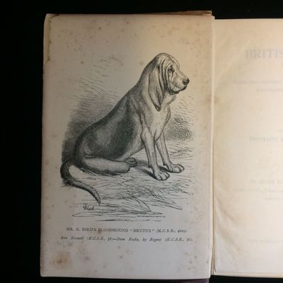 British dogs, their varieties,...