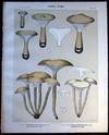 View Image 1 of 2 for Original Color Lithograph Plate 46 Clitocybe Clavipes & Clitocybe Monadelpha Inventory #26093