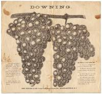 [Broadside]: Downing. This is an exact representation of the Downing Grape, and is made from a photograph